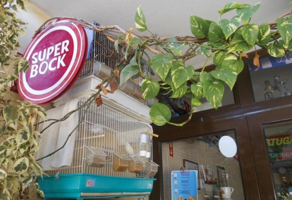 Superzwitscher